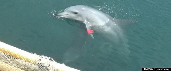 Dolphin reunites with Family